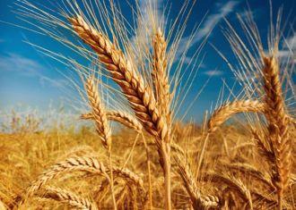 Importações anuais de trigo do Irã para chegar a 7 milhões de toneladas por mar 2014