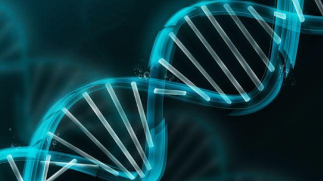 Cromossomo Y ligado ao câncer, o risco de morte em homens