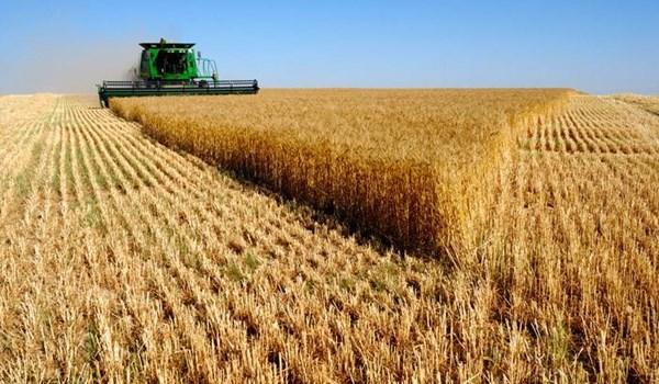 Exportação de trigo do Irã aumenta 758%