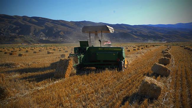 Irã espera fazer a primeira exportação de trigo em anos