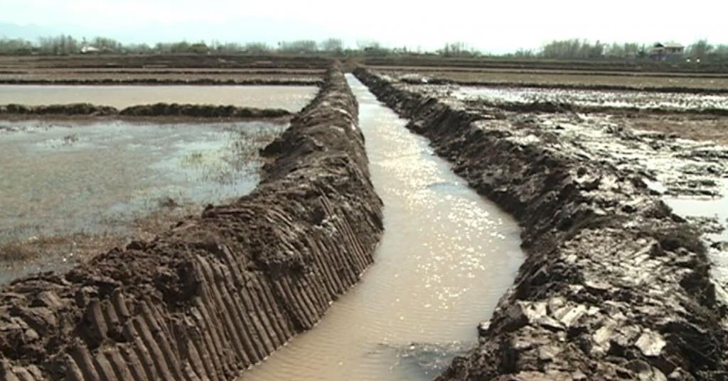 Chinese to finance paddy field improvement project northern Iran
