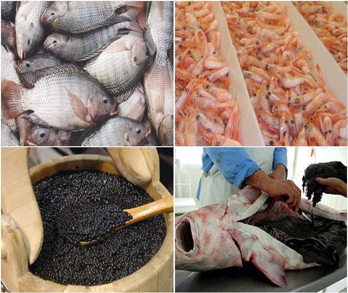 Produção de camarão e caviar iraniano tem previsão de aumento de 50% até março 2017