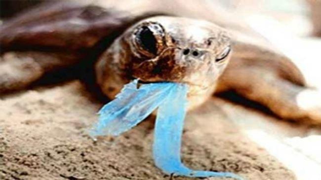 Trilhões de pedaços de plástico nos oceanos do mundo: Estudo