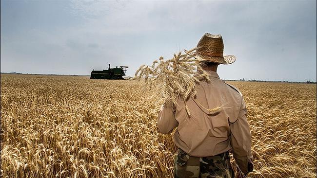Irã de exportar trigo pela primeira vez.