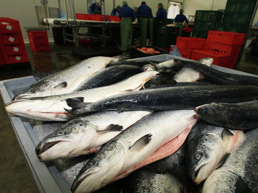 As exportações anuais de pescado devem chegar a US $ 450-500m até o final do ano do calendário iraniano