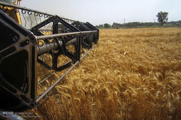 A autossuficiência do trigo continua