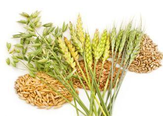 FAO prevê saída de 2.014 cereal do Irã em 20.4m de toneladas