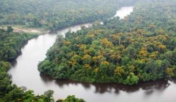 Descubra a Amazônia das raízes às folhas
