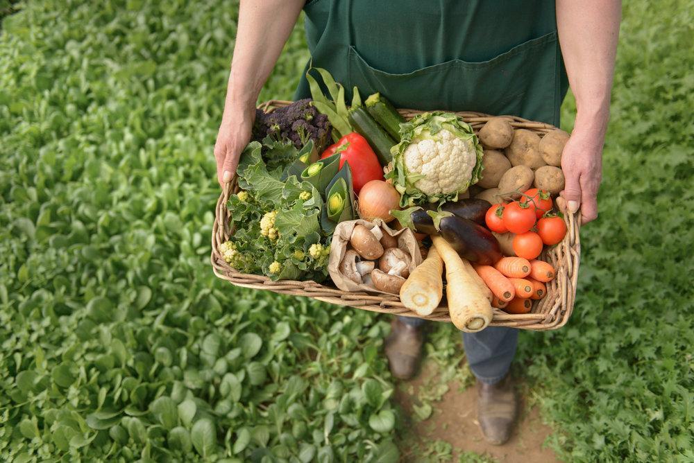 Festival de produtos orgânicos começa na próxima semana
