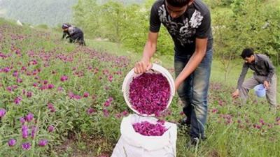 Irã abre primeiro museu erva contendo mais de 1.700 amostras de erva