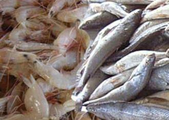 Irão para iniciar as exportações de produtos da pesca para a Rússia em breve
