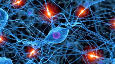 Scientists discover new brain cell types