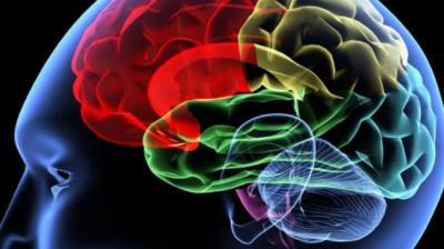 Cientistas identificam ponto fraco do cérebro para a demência