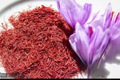 Saffron export breaks a 10-year record