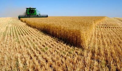 Iran's Wheat Export 7 Folded