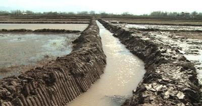 China vai financiar projeto de melhoria de arrozais no Irã