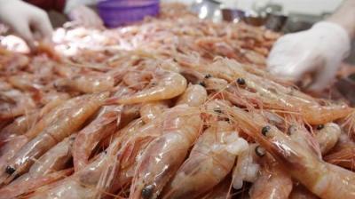 Irã exporta 30 toneladas de camarões para a Rússia