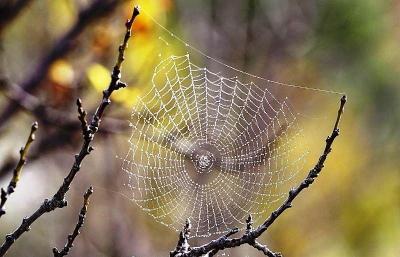 Nova aranha encontrada no Irã