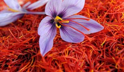 Iran Exports 160 Tons of Saffron in 9 months
