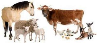 Livestock and poultry exports from Semnan prov. up by 550%