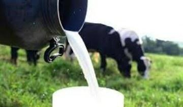 Brasil começa a exportar leite e produtos lácteos para o Japão