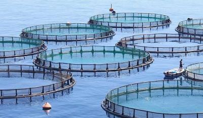Iran's aquaculture ranks 1st in Middle East