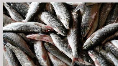 Polônia se interessa em importar peixe do mar Cáspio do Irã