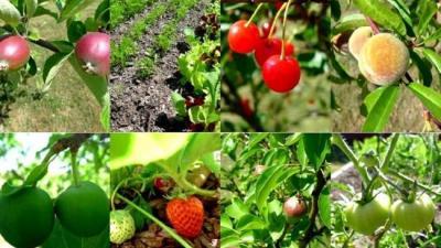 250 milhões de pessoas na festa Irã horticultura.