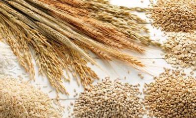2015 cereal saída do Irã para chegar 19.8m de toneladas: FAO