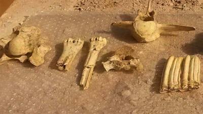 Fósseis de 40.000 anos de idade descobertos em Mahallat