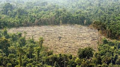 Amazon deforestation rate shrinks by 18%: Brazil