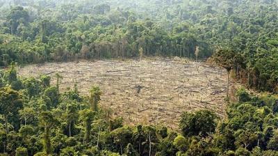 Taxa de desmatamento da Amazônia diminui em 18%: Brasil