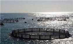 Irã e França aumentam cooperação em projetos pesqueiros.